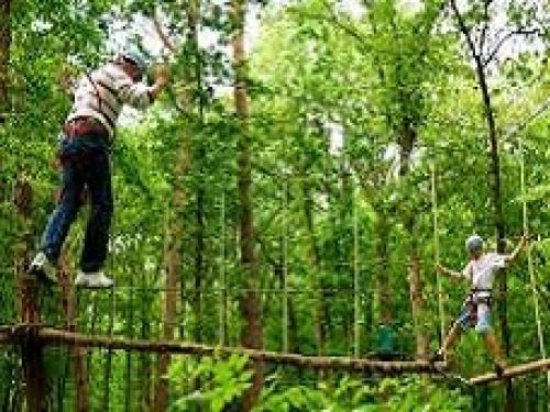 activiteiten_tree_climbing