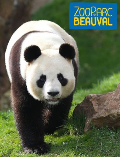 home_en_zoo_beauval