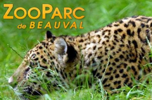 in-the-area_zoo_beauval