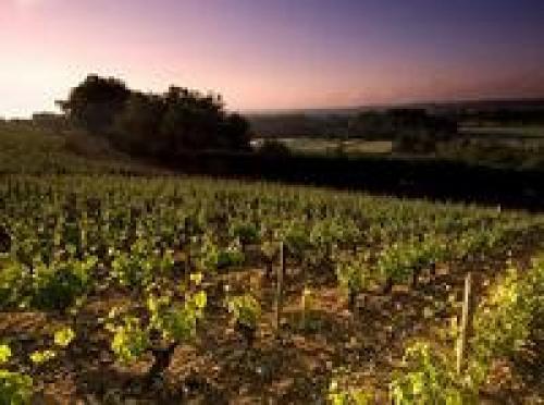 local-produce_vine