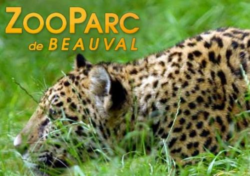parcs-zoos-animaliers-beauval