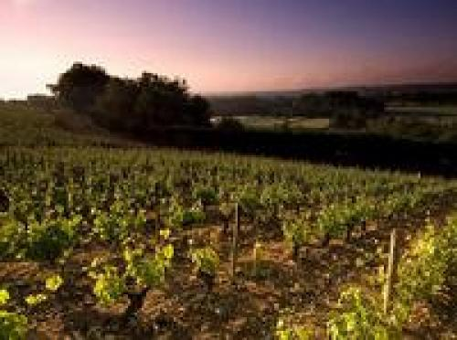 terroir-es_vinos_02