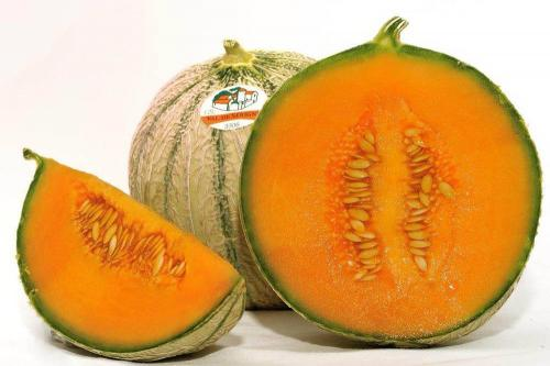 terroir_melon