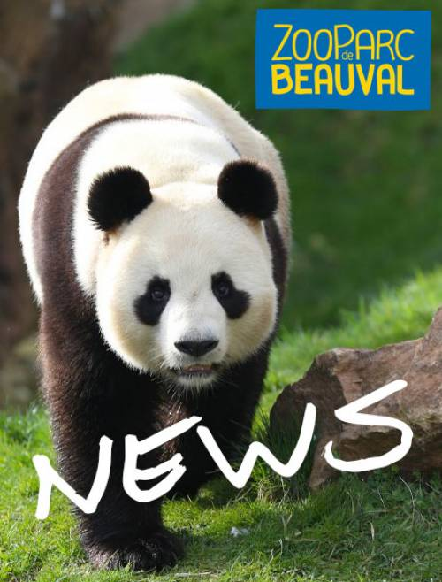 zooparc-de-beauval_news
