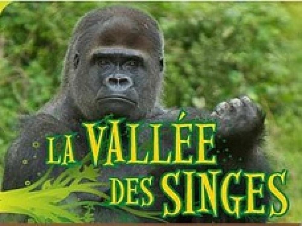 parcs-zoos-animaliers-vallée-des-singes